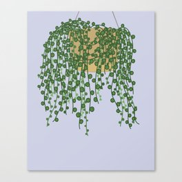 String of Pearls Plant Canvas Print