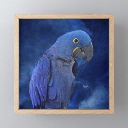 Hyacinth Macaw Framed Mini Art Print