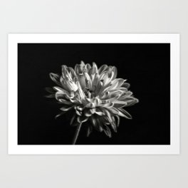 Black and White Dhaila Art Print