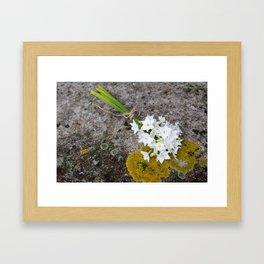 Bunch of narcissi Framed Art Print