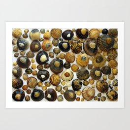 Shell Background Art Print