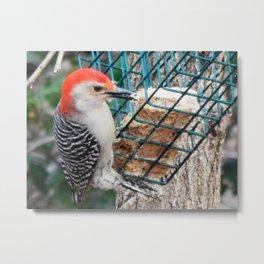 Woodpecker suet Metal Print