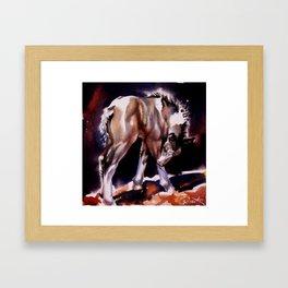 Foal Scratches  Framed Art Print