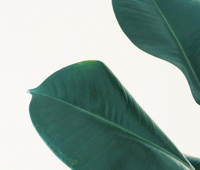 Rubber Fig Leaves I Metal Travel Mug
