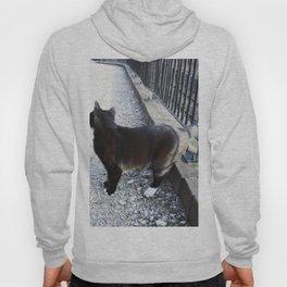 Railway Cat Observing Hoody