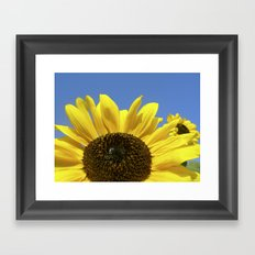 summer sunflower IV Framed Art Print
