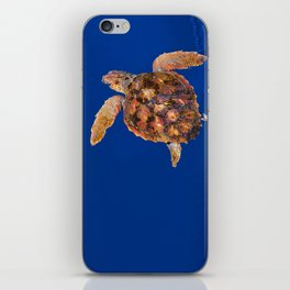 Loggerhead turtle iPhone Skin