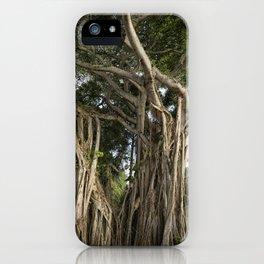 Banyan Tree at Bonnet House iPhone Case