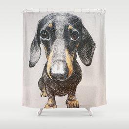 Dog dachshund Shower Curtain