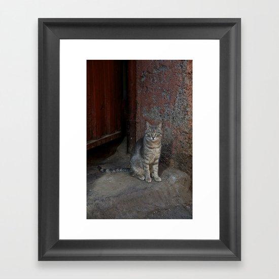 Marrakesh Cat Framed Art Print