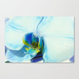 Blue Orchid II Canvas Print