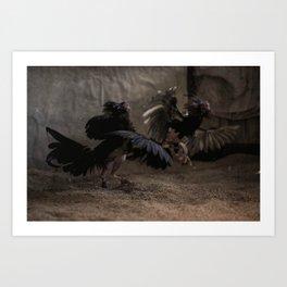 Cockfighting 9 Art Print