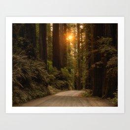 Sunrise in the Redwoods Art Print