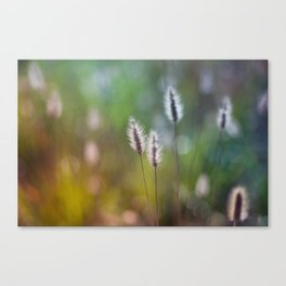 summer meadow Canvas Print