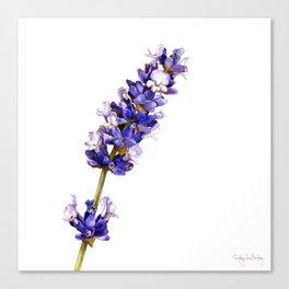 Mediterranean Lavender on White Canvas Print