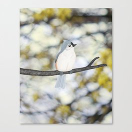 tufted titmouse - bokeh Canvas Print