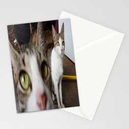 Back Yard Kitties  Stationery Cards