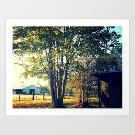 Tree in the Light Art Print