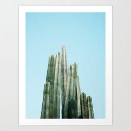 Tall cacti | Cactus photo print | Colourful travel wanderlust photography art Art Print