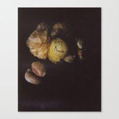 Ranunculus Still Life Canvas Print
