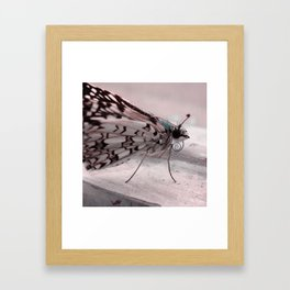 Chill Butterfly Framed Art Print