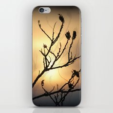 The Branches That Reach Up To Heaven iPhone & iPod Skin