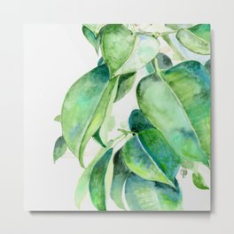 Ficus elastica watercolor hand painted art Metal Print