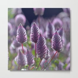 Mulla Mulla Meadow II Metal Print
