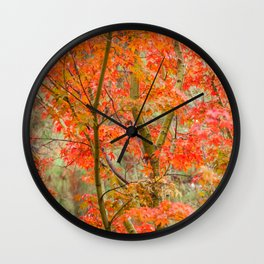 Japanese Maple in autumn Wall Clock