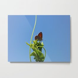 Butterfly On Cucumber Plant Metal Print
