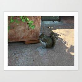 Crouching Squirrel Art Print