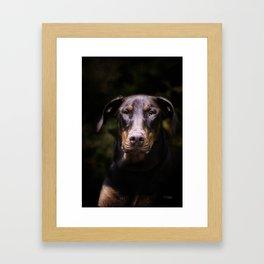 Red Dobie Framed Art Print