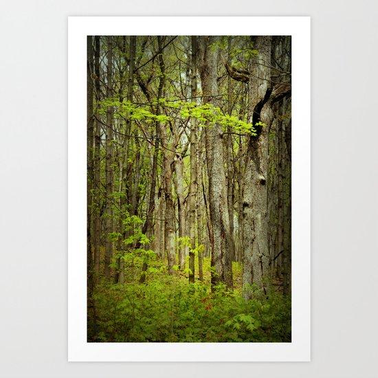 April Woods Art Print