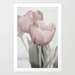 Dreamy tulip portrait Art Print