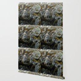 Coastal Rock Microcosms Wallpaper