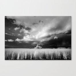 Big Cypress National Preserve, Florida Canvas Print