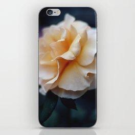 Apricot Rose iPhone Skin