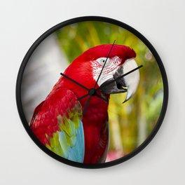 Green Winged Macaw Ara chloropterus Lahaina Maui Hawaii Wall Clock