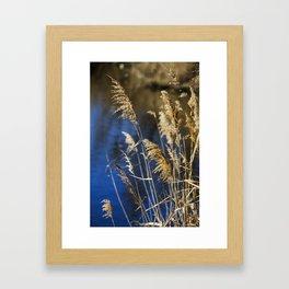 Reeds in Camargue Framed Art Print