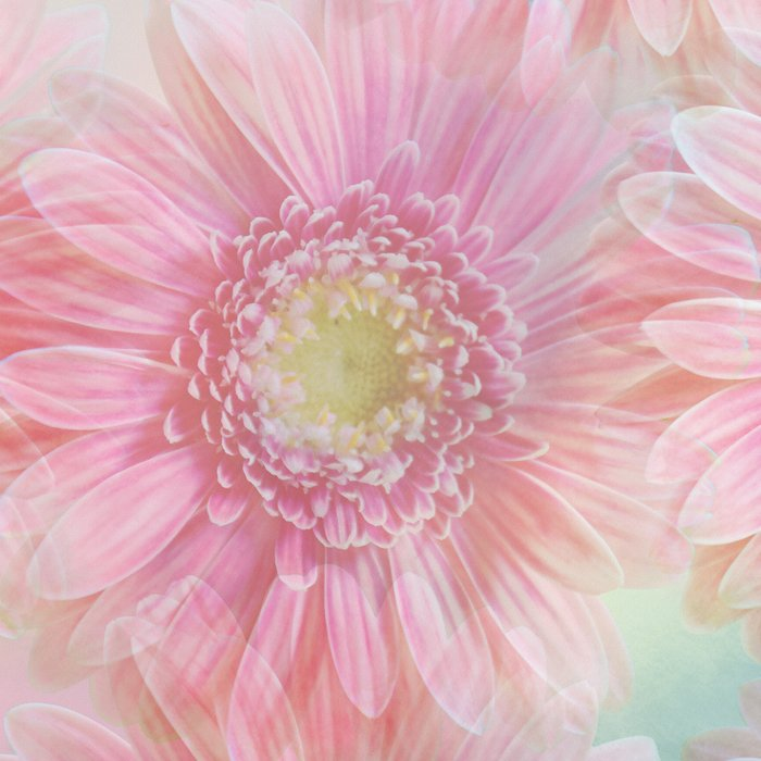 Pink daisies on a pastel background. Leggings