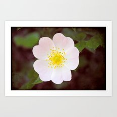 Moody Dog Rose Art Print