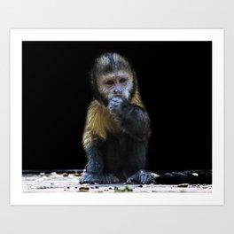 Capuchin Art Print