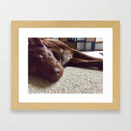 Australian Red cloud kelpie dog Framed Art Print