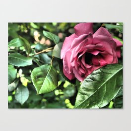 Drama Rose - Nature Photography Canvas Print