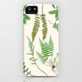 Ferns on Cream II - Vintage Botanical Print iPhone Case