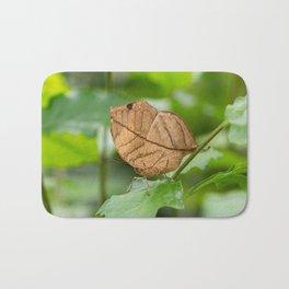 Orange oakleaf, Indian oakleaf or dead leaf, is a nymphalid butterfly Bath Mat