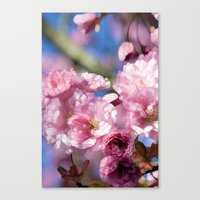 cherry blossoms Canvas Prints featuring Cherry Blossoms by Joke Vermeer