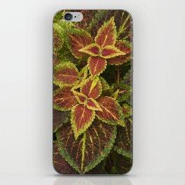Coleo Coleus iPhone Skin
