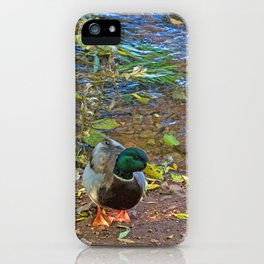 Mallards in Autumn iPhone Case