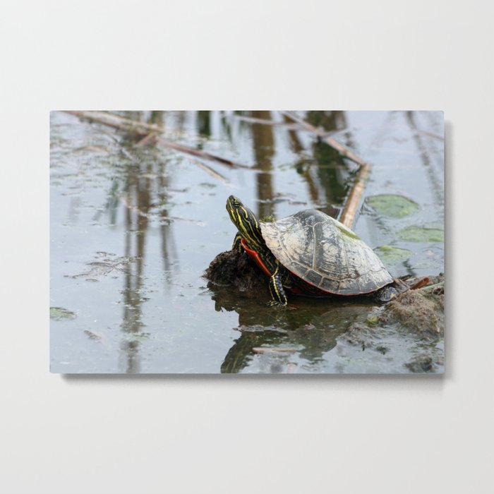 Painted Turtle Reflection Metal Print